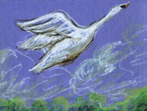 Swan Flying illus